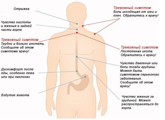 Препараты для лечения простатита и импотенции